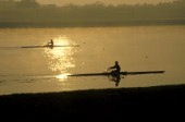 Two scullers racing on the river Thames. UK