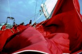 Crew strain to pull in the huge red spinnaker onboard the classic yacht Adela