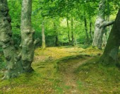 Path through beech trees in the New Forest. Limited Edition prints available.