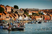 Seagulls and fishing boats fill the harbor on a sunny afternoon in Whitby, England.