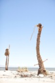 Two arms appearing humoruously out of the side of a dead standing palm tree along the shoreline of the Salton Sea.