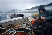 08/15/08  Crew member Nick Demmert repairs the net while sein fishing on Captain Larry Demmerts boat just off of the outer islands west of Prince of Whales Island in SE Alaska. This is a native fishing hole. At this time they were catching mostly humpies.