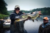 Fly fishing guide Lucky Porter landing a musky on the Flambeau River in Northern Wisonsin