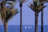 Sail boats on the Mediterranean are framed by palms growing on the beach in Barcelona.