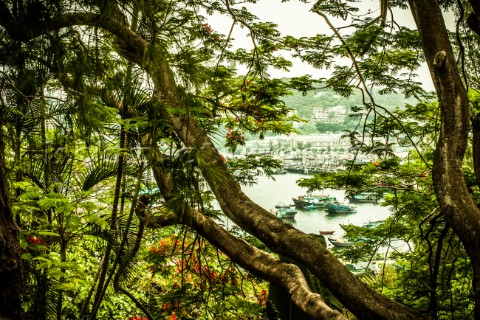Tropical trees with boats in a harbor visible through a break in the vegetation Tim MartinAurora Pho