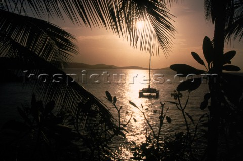 Silhouetted catamaran at sunset between palm trees St Thomas US Virgin Islands Nance TrueworthyAuror