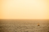 A sailing yacht cruising at sunset on an autumn evening off the coast of Palos Verdes, California. Ty Milford/Aurora Photos/Kos Pictures